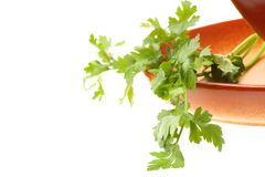 Tomato soup, parsley isolated white background Royalty Free Stock Photos