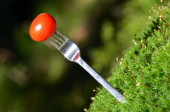 A tomato speared on a fork Stock Photo