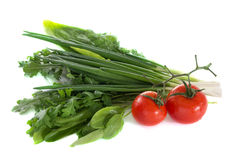 Tomato spinach onions sorrel parsley fennel. Arugula Royalty Free Stock Photography