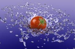 Tomato Splash Stock Photography