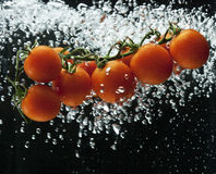 Tomato splash in water Stock Image