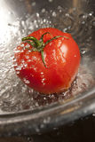 Tomato Splashed with Water. Ripe red tomato splashed with water in stainless steel metal colindar Royalty Free Stock Photography