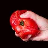 Hand squashing a juicy tomato Royalty Free Stock Images