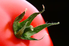 Tomato star. Macro shot of a tomato with its leaves spread out, in soft light royalty free stock photo