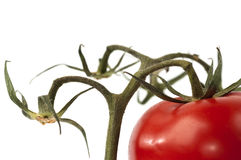 Tomato with stem Stock Photos