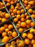 Tomato still Royalty Free Stock Photos