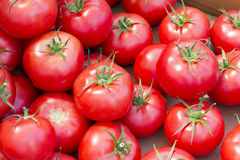 Tomato. A tomato with tails background Stock Images