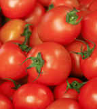 Tomato, Thailand Royalty Free Stock Photo
