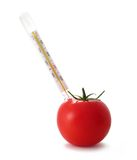 Tomato with thermometer Royalty Free Stock Images