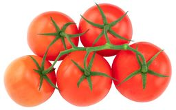 Tomato. Tomato branch. Tomatoes isolated on white. With clipping path, top view royalty free stock image