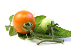 Tomato on tomato leaf Royalty Free Stock Photos