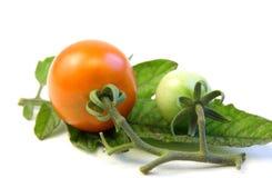 Tomato on tomato leaf. From garden on white Royalty Free Stock Photos
