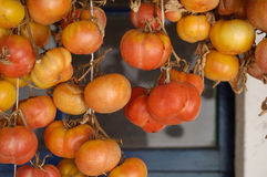 Tomato,tomatoes hanging wintering Royalty Free Stock Photos