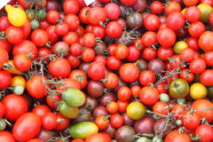 Tomato varieties Stock Photo