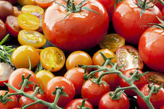 Tomato Varieties on Black Stock Photography