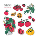 Tomato varieties, hand drawn set. branch, flowers, bush, part in a cut. Colorful vector illustration with cherry Royalty Free Stock Photos