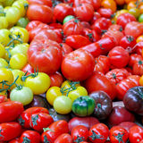 Tomato variety Royalty Free Stock Photo