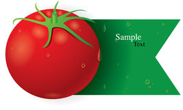 Tomato vector Royalty Free Stock Photos
