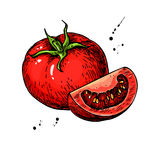 Tomato Vector Drawing. Isolated Tomato And Sliced Piece. Vegetable