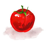 Tomato Vector illustration  hand drawn  painted Stock Photography