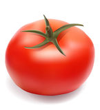 Tomato vector illustration Stock Photo