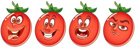 Tomato. Vegetable Food concept stock photos