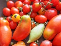 Tomato vegetable Stock Photography