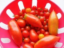 Tomato vegetable Royalty Free Stock Photo