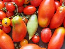 Tomato vegetable Royalty Free Stock Image