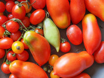 Tomato vegetable Stock Image