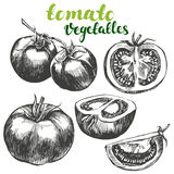 Tomato vegetable set hand drawn vector illustration realistic sketch Stock Photography
