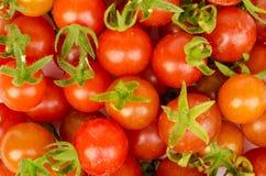 Tomato vegetable . Royalty Free Stock Photo