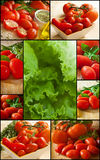 Tomato and vegetables Royalty Free Stock Images