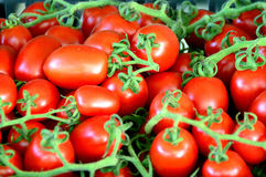 Tomato,biological,vegetables,food,ingredient,organic Royalty Free Stock Photos