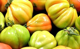 Tomato,biological,vegetables,food,ingredient,organic. Group of tomatoes very big Stock Photography