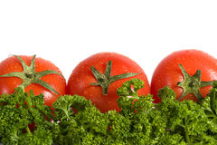 Tomato vegetables and greens isolated on white. Fresh red tomato vegetables with drops of water and green parseley isolated on white Stock Photos