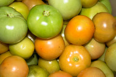 Tomato vegetables. Source of vitamins Stock Photography
