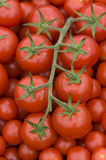 Tomato on the vine Royalty Free Stock Photography