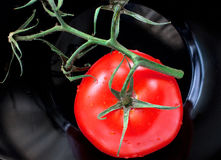 Tomato on vine Stock Photos
