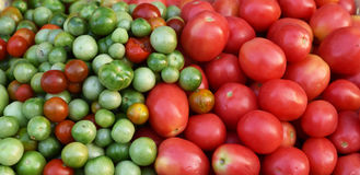 Tomato vine Stock Image
