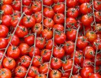 Tomato on vine Stock Photography
