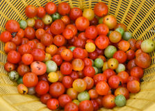 Tomato vine. From the market Royalty Free Stock Photography