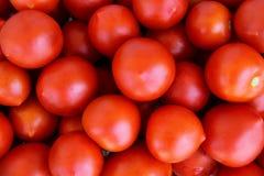 Tomato Wallpaper Stock Photography