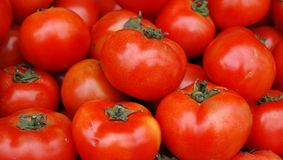 Tomato wallpaper royalty free stock photography