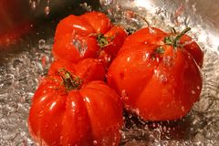 Tomato wash. Still life vegetable Royalty Free Stock Photo