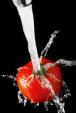 Tomato and Water Royalty Free Stock Photography