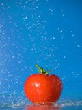 Tomato and Water Royalty Free Stock Photo