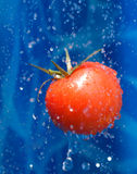 Tomato in a water droplets. Tomato dropping ina splash of water drops royalty free stock photography