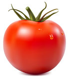 Tomato with water drops. Photorealistic  illustration. Tomato with water drops Stock Image