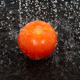Tomato and water drops Royalty Free Stock Photography